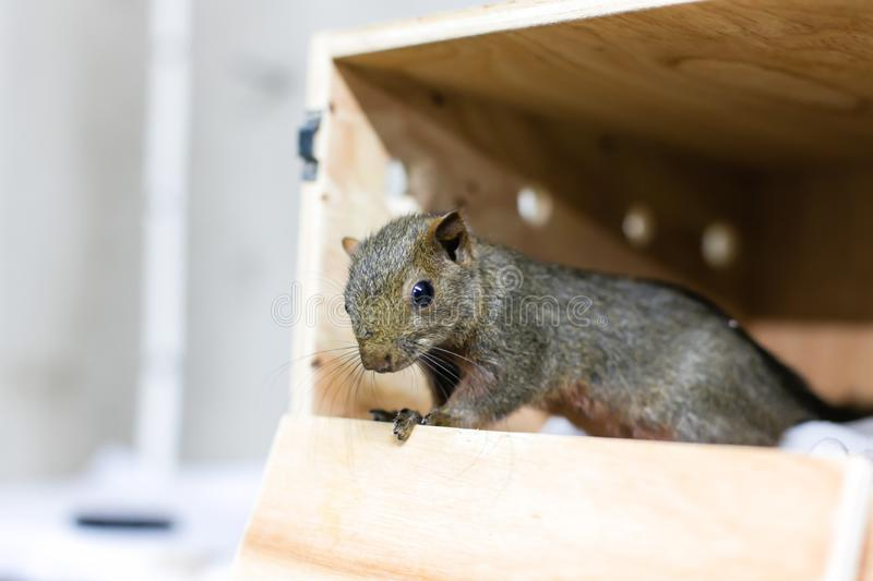How to get rid of ground squirrels?