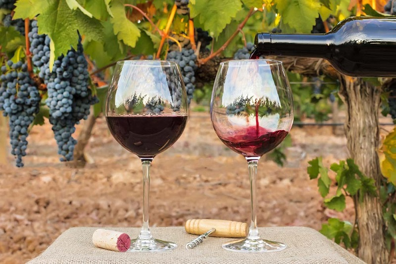 Enjoy The Wine In Napa Valley