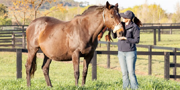 How to tell if a mare is pregnant